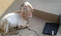 Using loops is cheating.-music-lover-funny-goat.jpg