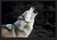 Akai unveils Rhythm Wolf - analog drum machine and bass synth-screen-shot-2014-06-06-16.54.07.png