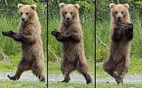 Looking for the King of all hardware Drum Machines-potd-dancing-bear_3007281b.jpg