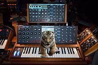 Moog matriarch-voyager-1-1_blue-tiger-sm.jpg