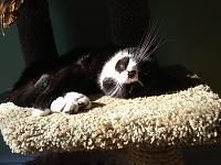 Cats & Synths Thread 2021<-img_20200214_102348007.jpg