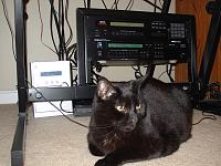 Cats & Synths Thread 2021<-dsc04625.jpg