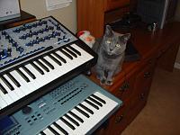 Cats & Synths Thread 2021<-dsc03908.jpg
