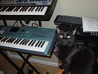 Cats & Synths Thread 2021<-dsc03830.jpg