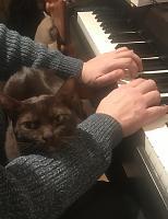 Cats & Synths Thread 2021<-8ba5efaf-ef15-451f-a85b-e46940d3003e.jpg