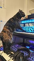 Cats & Synths Thread 2021<-nairobi.jpg