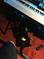 Cats & Synths Thread 2021<-87209836-16b4-40b8-8d0e-9aa0eca4fe7e.jpg