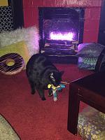 Cats & Synths Thread 2021<-227b8ab3-68ab-4932-8c05-5ae6dde6e0fe.jpg
