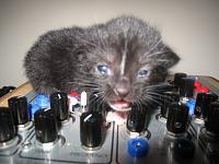 Cats & Synths Thread 2021<-img_0545.jpg
