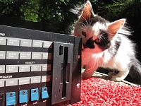 Cats & Synths Thread 2021<-img_2201.jpg