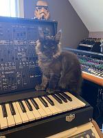 Cats & Synths Thread 2021<-aec81942-f103-47bf-8d6a-4857803ee794.jpg