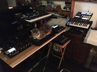 Cats & Synths Thread 2021<-b22cf5ad-3e76-435d-a7bf-91a9be972188.jpg