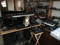 Cats & Synths Thread 2021<-f231a6bd-3f4d-417d-902e-7f3c58c1fb79.jpg