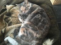 Cats & Synths Thread 2021<-64585fae-b8a1-49ee-acfd-74f35c433b96.jpg