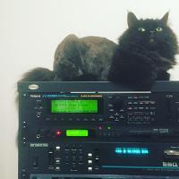 Cats & Synths Thread 2021<-img_4431.jpg