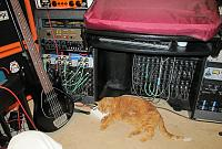 Cats & Synths Thread 2021<-webster_orange_pedal.jpg