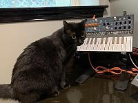 Cats & Synths Thread 2021<-nera.jpeg