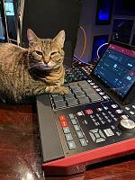 Cats & Synths Thread 2021<-sasha1.jpg