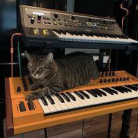 Cats & Synths Thread 2021<-sasha2.jpg