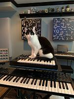 Cats & Synths Thread 2021<-zora.jpg