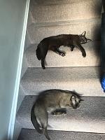 Cats & Synths Thread 2021<-c286ed1c-66d6-40eb-8023-08526e5d01c7.jpg