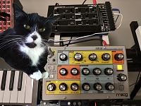 Cats & Synths Thread 2021<-squeaky-synths.jpg