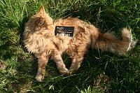 Cats & Synths Thread 2021<-img_1688.jpg