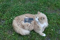 Cats & Synths Thread 2021<-img_1694.jpg
