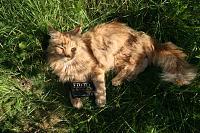 Cats & Synths Thread 2021<-img_1690.jpg