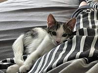 Cats & Synths Thread 2021<-216394822_401045194642841_7847155875827220888_n.jpg