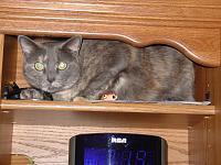 Cats & Synths Thread 2021<-dsc02499.jpg