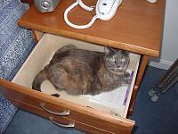 Cats & Synths Thread 2021<-dsc02502.jpg