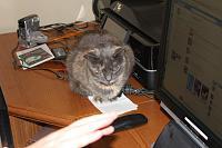 Cats & Synths Thread 2021<-img_3469.jpg