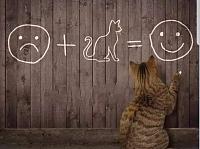 Cats & Synths Thread 2021<-smilecat.jpg