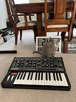 Cats & Synths Thread 2021<-gm-cat.jpg