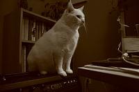 Pets in the studio (pics)-joey_mesa.jpg