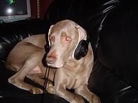 Pets in the studio (pics)-dsc00639.jpg