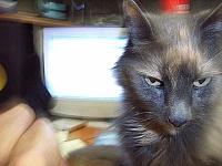 Pets in the studio (pics)-nattie.jpg