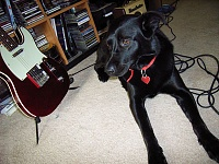 Pets in the studio (pics)-onyx.jpg