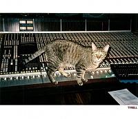 Pets in the studio (pics)-tyrell.jpg