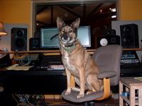 Pets in the studio (pics)-aggie.jpg