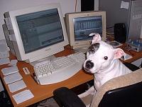 Pets in the studio (pics)-dog-mix.jpg