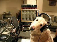 Pets in the studio (pics)-max-dog.jpg