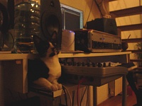 Pets in the studio (pics)-dsc03801.jpg