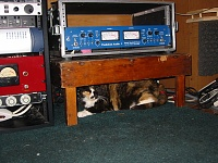 Pets in the studio (pics)-cat-pendulum.jpg