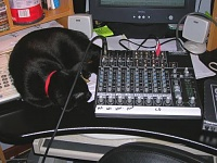 Pets in the studio (pics)-pete-guarding-my-mix.jpg