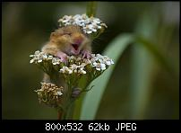 Something to bring a smle-hamster-loves-flowers.jpg