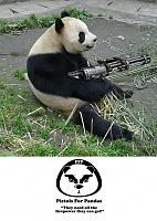 Got a C800G today.-pandas-need-guns.jpg