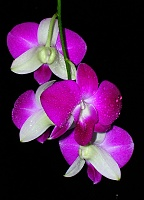 Plant Lovers....-orchid1_a.jpg