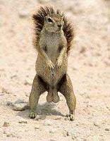 La2a Hardware vs UAD LA2a Software - Part Deux!-t1_squirrel_nuts.jpg